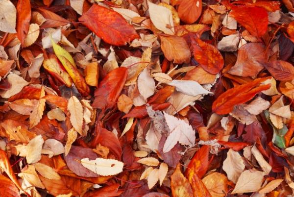 秋冬に抜け毛は3倍増える?理由と対策をご紹介